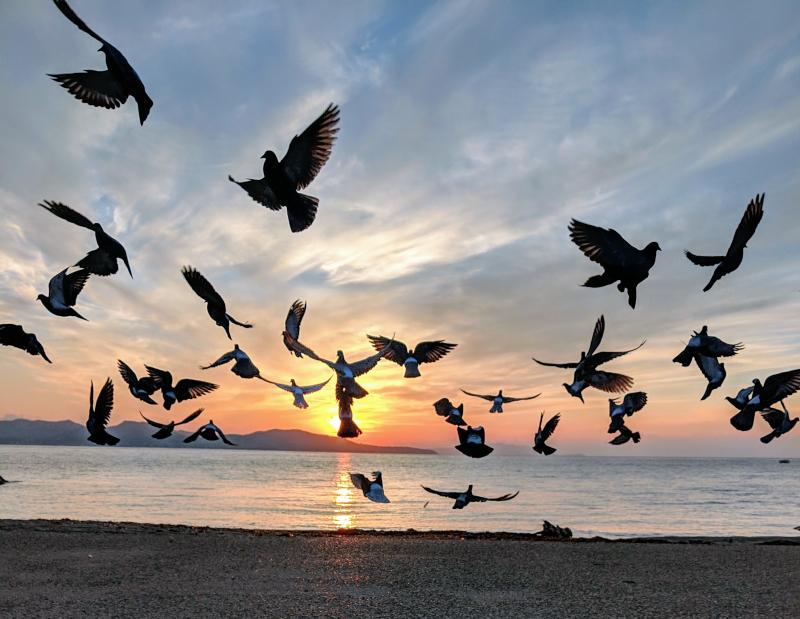 Doves by the sea in la ciotat