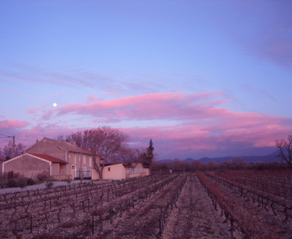 Vineyard in Sainte Cecile les vignes