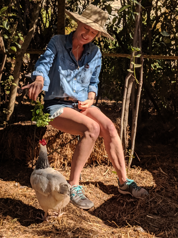 Kristi feeding hens