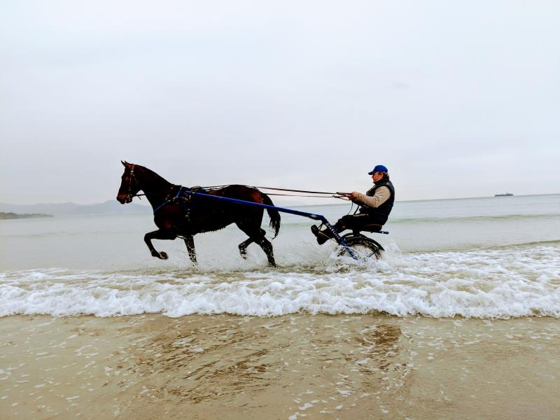 Horse and cart in mediterranean sea kaki polizzi la ciotat france