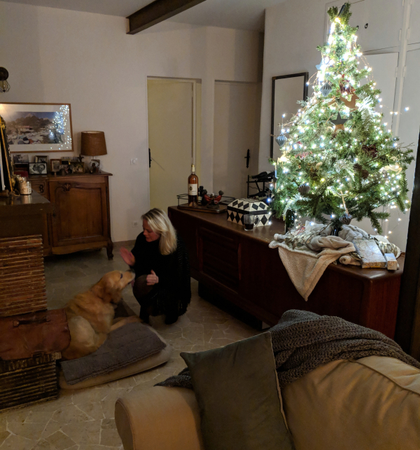 Smokey golden retriever Kristi Christmas