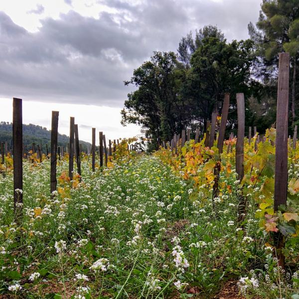 Vines mas des brun