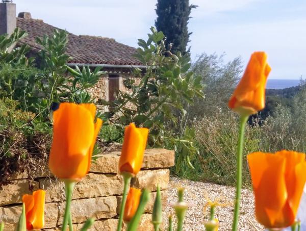 Our farmhouse as Mas des Brun
