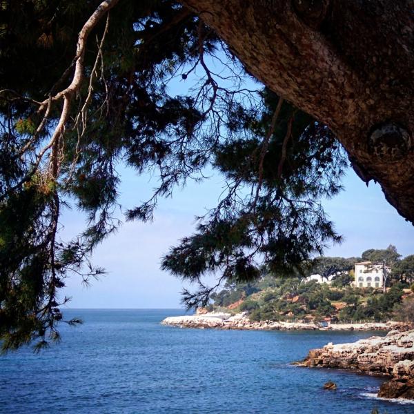 Seaside in Bandol France pine tree