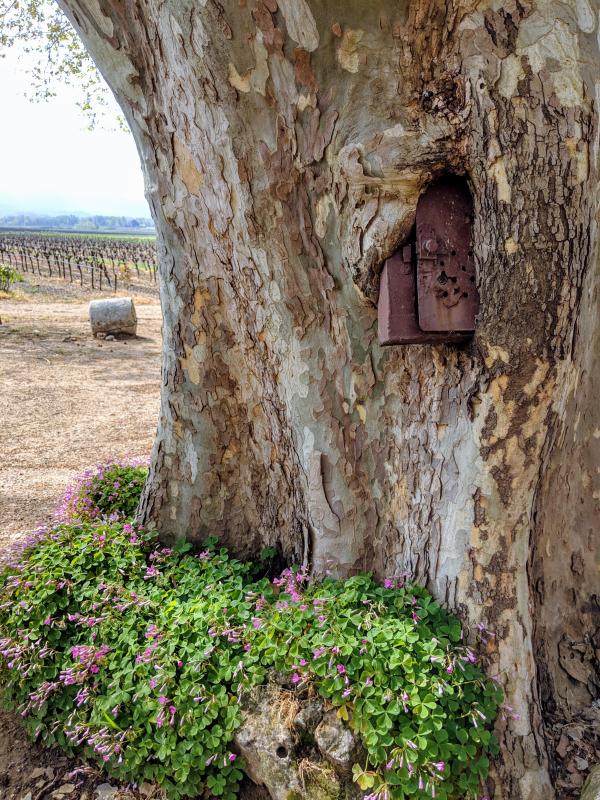 plane platane tree swallows mailbox