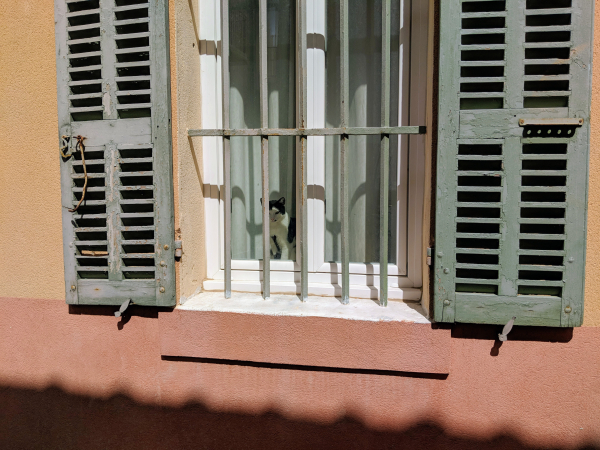 Cat chat volet wooden shutter window in cassis france