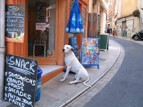 French dog (c) Kristin Espinasse