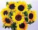 Freshflowers_2