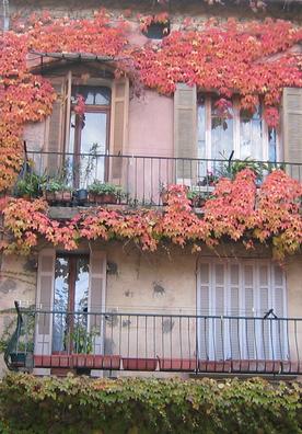 autumn leaves = feuilles d'automne (c) Kristin Espinasse