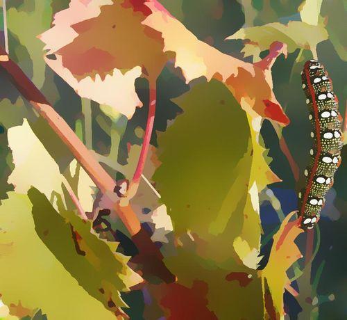 Caterpillar by Robert F.K. Martin